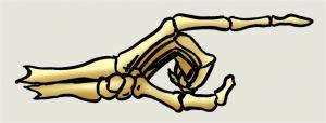 Skelettflosse